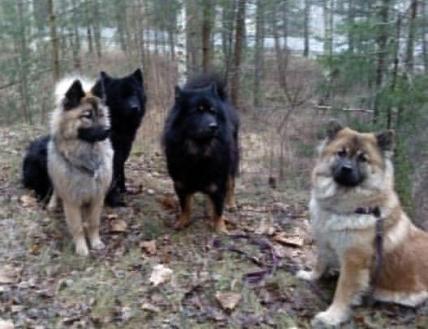 Alla hundar