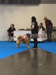 Aniston MY DOG 2017