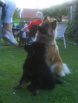 Iwo och Stella