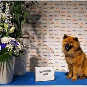 chewie champion
